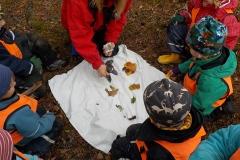 Kråkan lär barnen om olika lövsorter